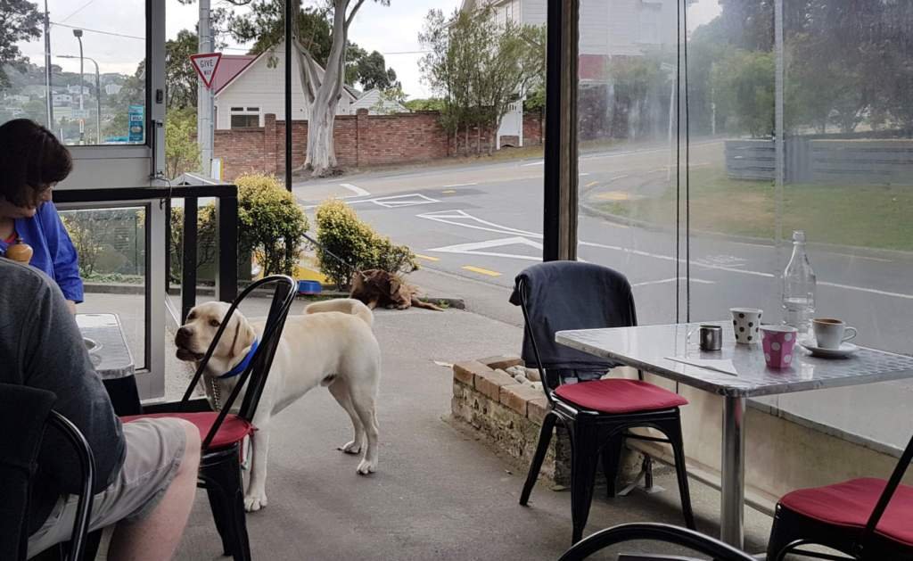 Dunsheas Deli looking out with dog